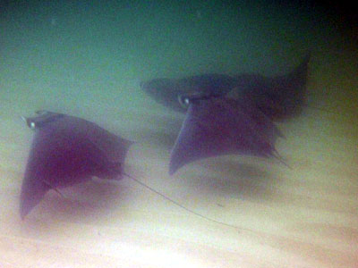 rays in stealth mode