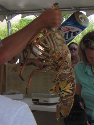 lobster13