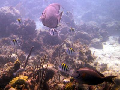 lots-o-fishies
