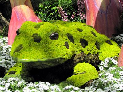 giant froggy